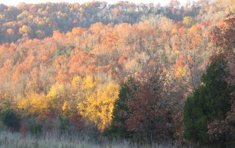 Red Oak Acorns