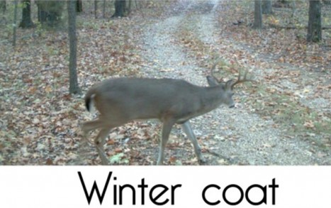 deer winter coat