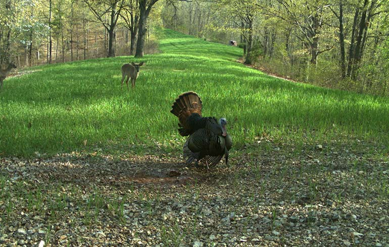 turkey season