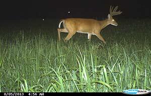 buck on camera