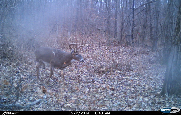 Moms_Buck_on_Trail_Cam
