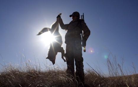 11ways-Coyote_hunting