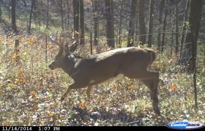 Deer_Run_color