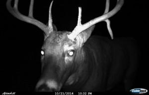 Up_close_IR_buck