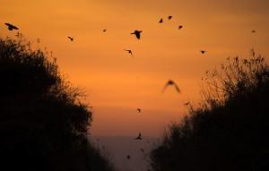 Dove_Pic_at_Sunset_Hafner_Photo