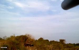 Shot_Under_Barrel_of_Doves