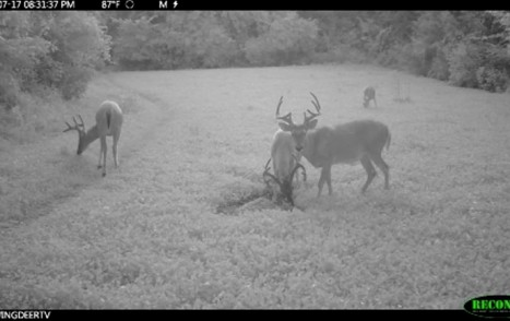 DeerMinerals