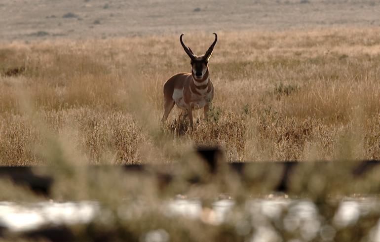 Antelope_Waterhole
