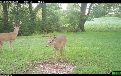 deer food plots