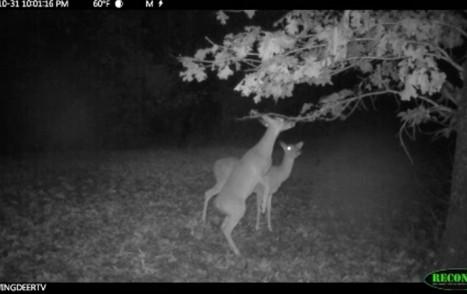 deerscrapers
