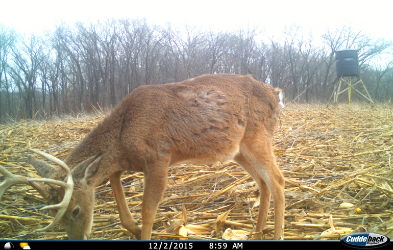 Buck_infood_plot_late_season