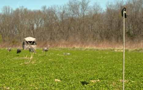 Trail_Cam_in_Decoy_Setup