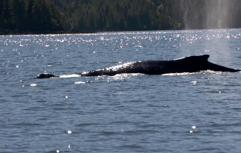 whale_surfacing