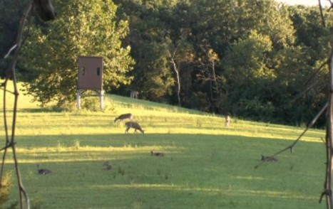 deer enclosures