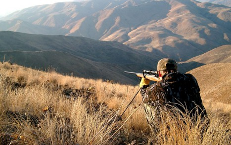 Mule_Deer_Hunting_001