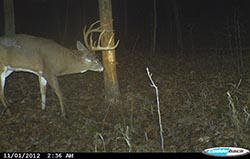 Rub Trail Camera Photo