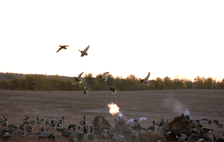 ducks_with_muzzle_blast
