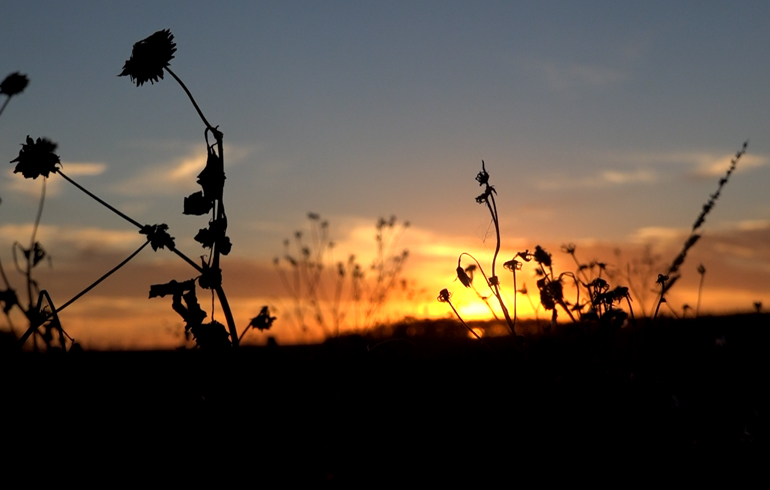 morning_sun