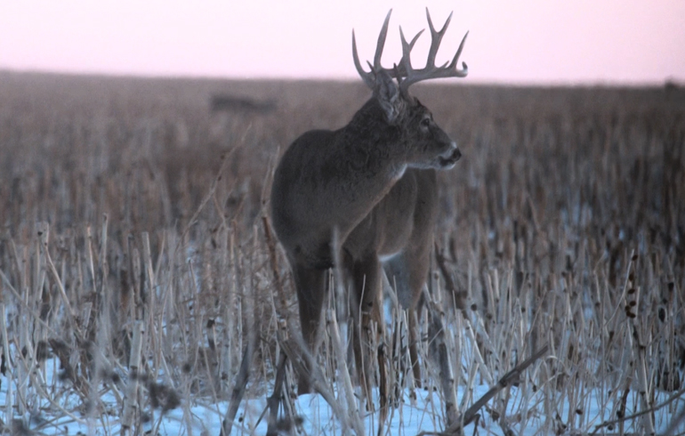 buck_in_sunset_with_snow