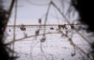 deer_from_blind