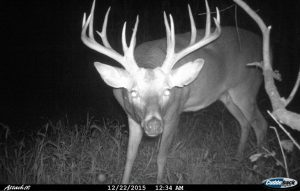 late_season_cuddeback_buck