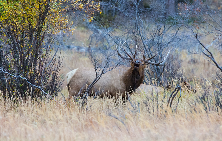 Elk Stopping Cartridges | Winchester Ammunition